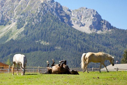 Holidays on a horse ranch in South Tyrol